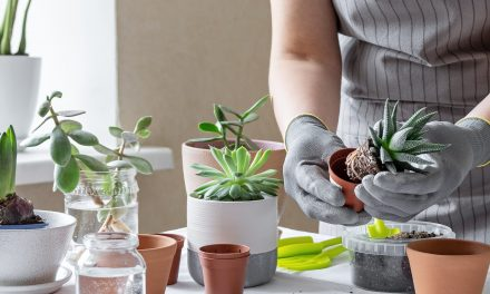 How to Start an Indoor Garden and Save Money