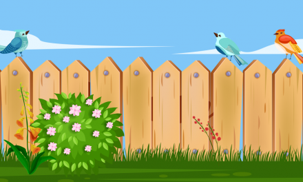 Build A Backyard Bird Paradise