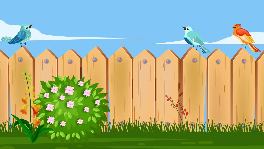 Build A Backyard Bird Paradise