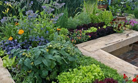 How to DIY a Raised Garden Bed and Its Benefits