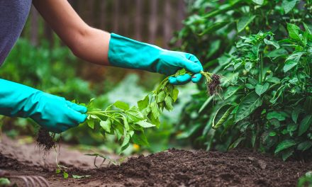 How To Use A Weeding Tool in Your Garden
