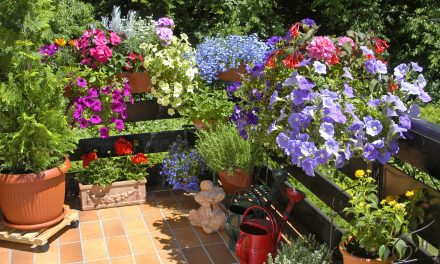 Decorative Outdoor Planter Ideas