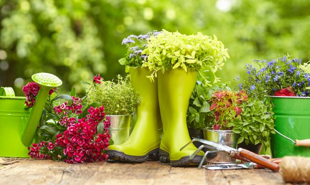 Essential Gardening Tools for Beginners