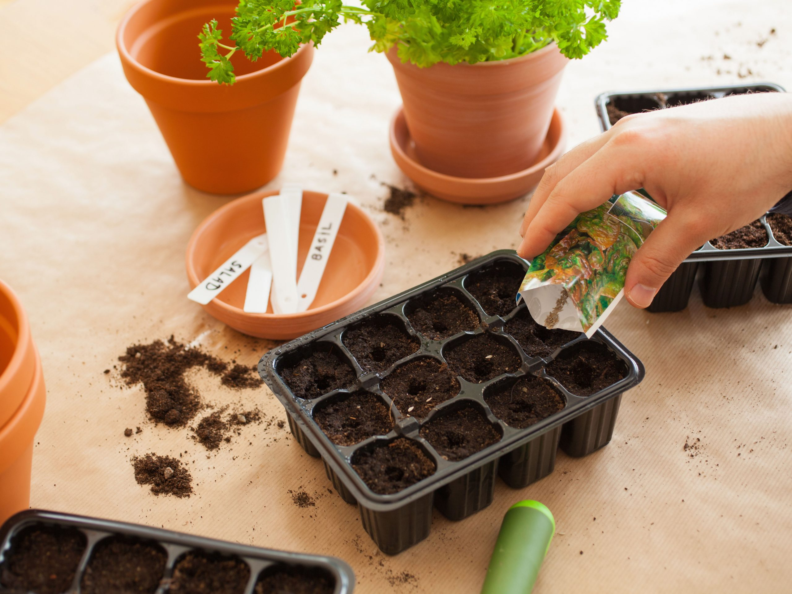 Germinate Vegetables from seeds