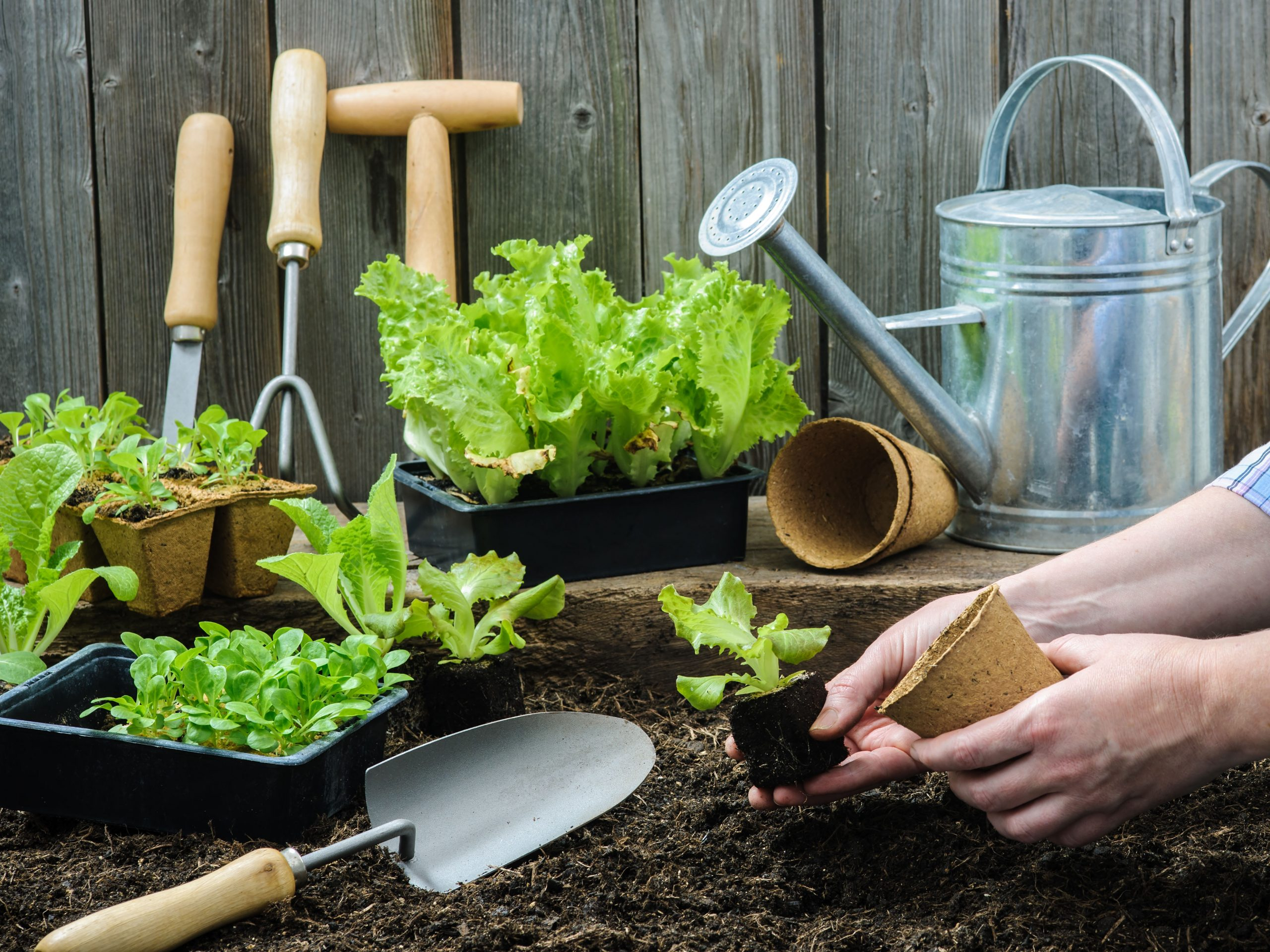 Plant Your Own Sustainable Vegetable Garden