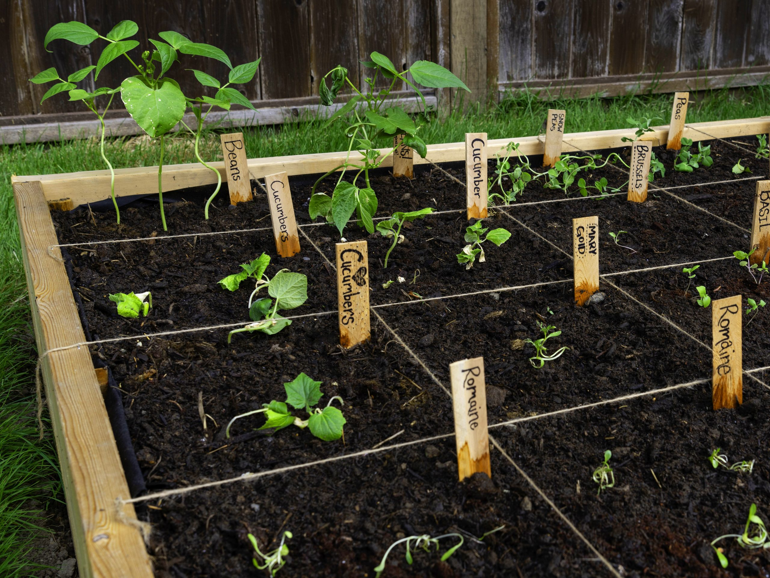 Raised Bed Vegetable Garden With Labels