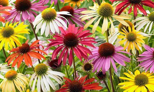The Best Flowers And Plants For Pollinators