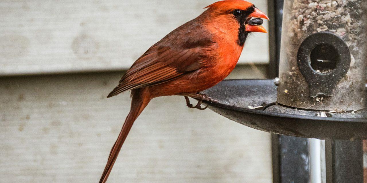 DIY Homemade Bird Feeder Ideas That Look Amazing