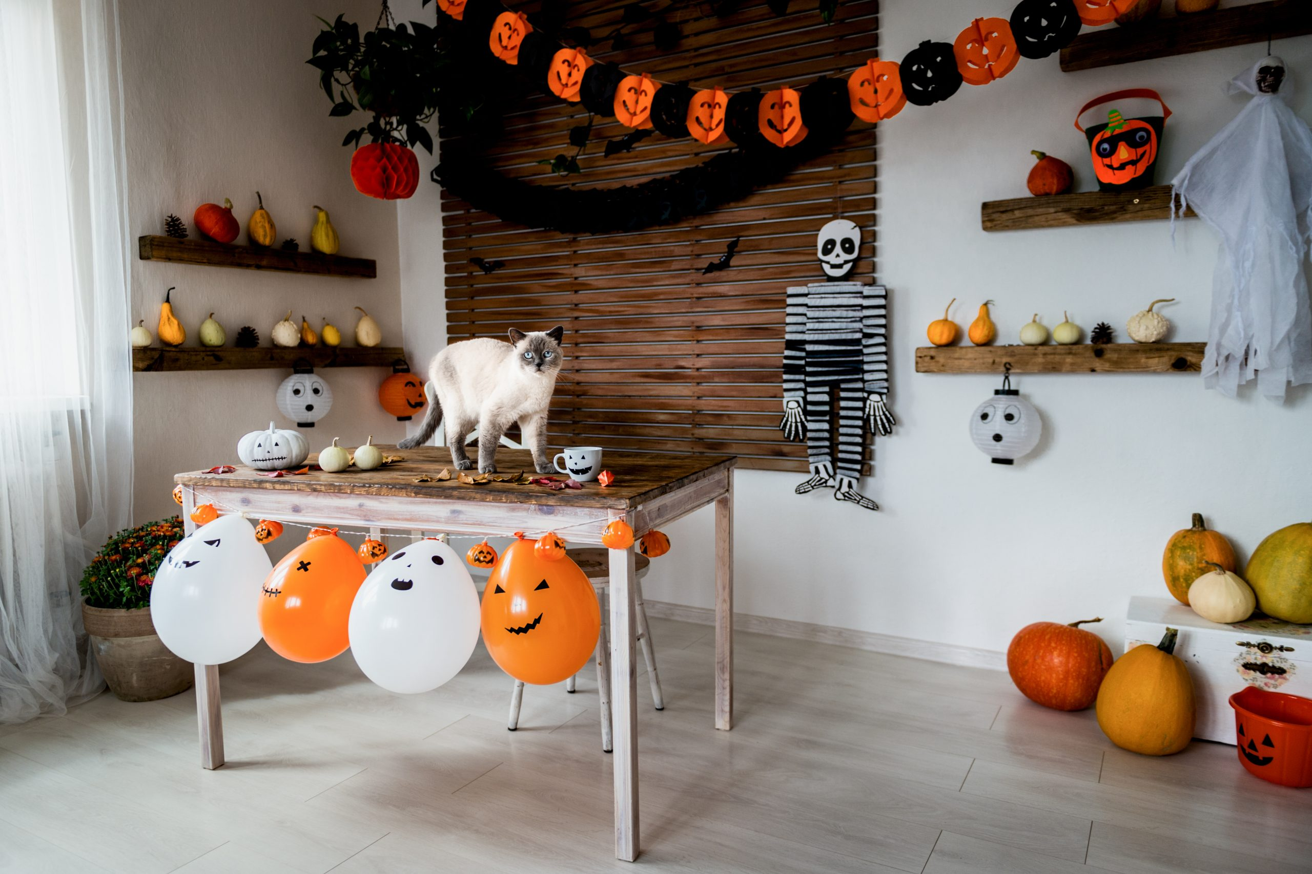 Halloween party with pumpkin decorations